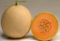 Muskmelon Madhuri Seed