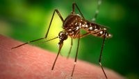 Mosquitoes Pest Control Services