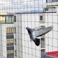 Reliable Pigeon Protection Net