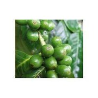 Green Coffee Extracts