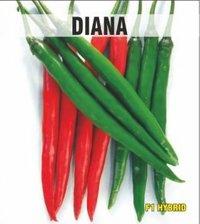 Diana Chilli Seeds