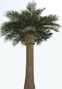 Artificial Canary Date Palm Trees