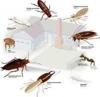 Pre Construction Termite Control Services