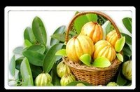 Garcinia Cambogia Liquid Herbal Extract