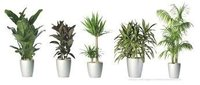 Attractive Colors Indoor Decorative Plant
