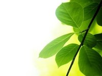 Environmental Consultant Services