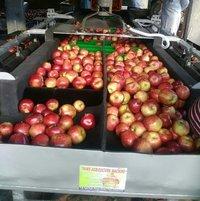 Apple Grading Machines