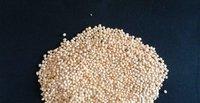 White Broom Corn Millet