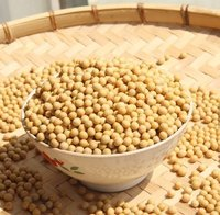 Soybeans Seeds