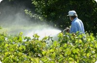 Chlorpyrifos(Insecticides)