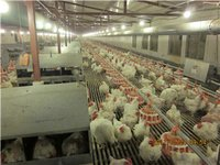 Automatic Controller Poultry Farm Equipment For Breeder