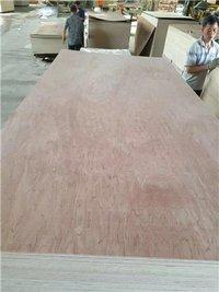 Bintangor Plywood Poplar Core E1/E0 Glue Furniture Use