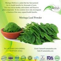 Moringa Oleifera Dry Leaf Powder