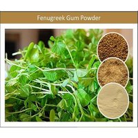 Natural Fenugreek Gum Powder