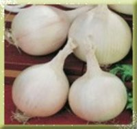 Milky White Onion Seed