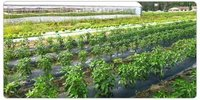 Green House Farming Services