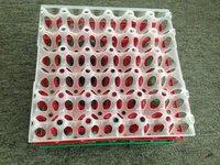 30 Holes Plastic Egg Tray