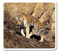 Eastern Rajasthan Wild Life Tour