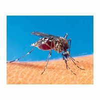 Mosquito Control Services