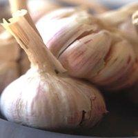 Garlic Water Extract
