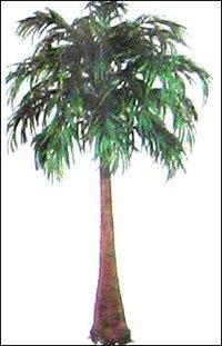 Manila Palm Tree
