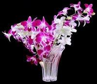 Dendrobium Orchid Flowers