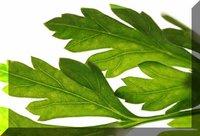 Medicine Plant