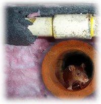 Advanced Rat Repellent