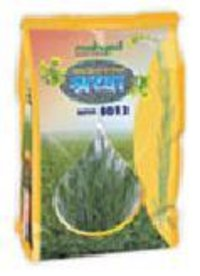 Hybrid Mustard Shraddha Mrr8012 Seeds