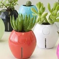 Outdoor/Indoor Plants