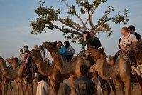 Rajasthan Wildlife Tours Service