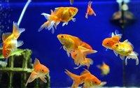 Soil And Water Probiotics For Aquarium
