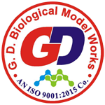 G. D. BIOLOGICAL MODEL WORKS