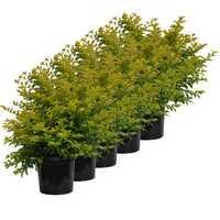 Screening Plant