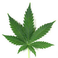 Medical Plant