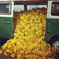 Banana Ripening Plant