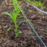 Micro Irrigation System
