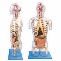 Medical Models