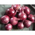 Onion Cloves
