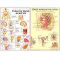 Biological Charts