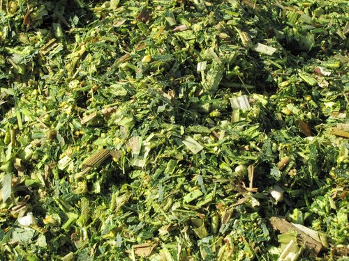 Corn Silage Cattle Feed
