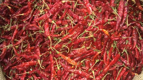 Dry Red Chili - Teja With Stem