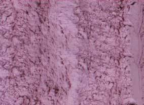 100 Mesh Dehydrated Red Onion Powder