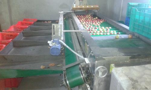 Industrial Apple Grader Machine